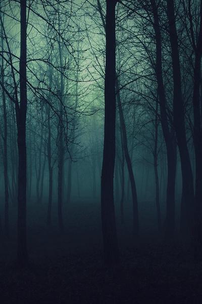 Dark forest wallpaper 1920x1200
