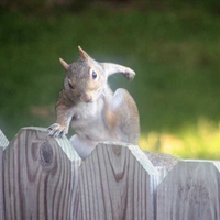 Parkour squirrel jumping over fence