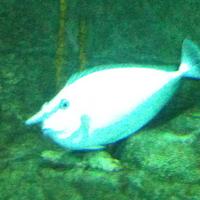 Crop fish