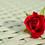 Rose red rose romantic rose bloom