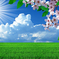 Nature spring flowers landscapes trees sky landscape background images