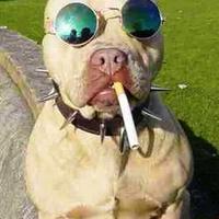 Funny dog 96