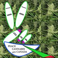Cannabis420