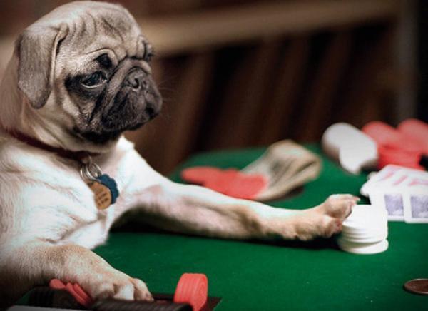 Animal gamble gambling income irs