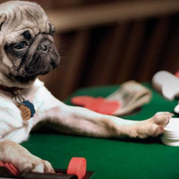 12046380 dont gamble with your pets health
