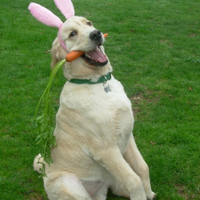 The easter retriever
