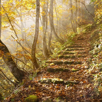 Autumn leaves owl