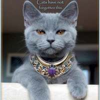 Cats were gods egypt